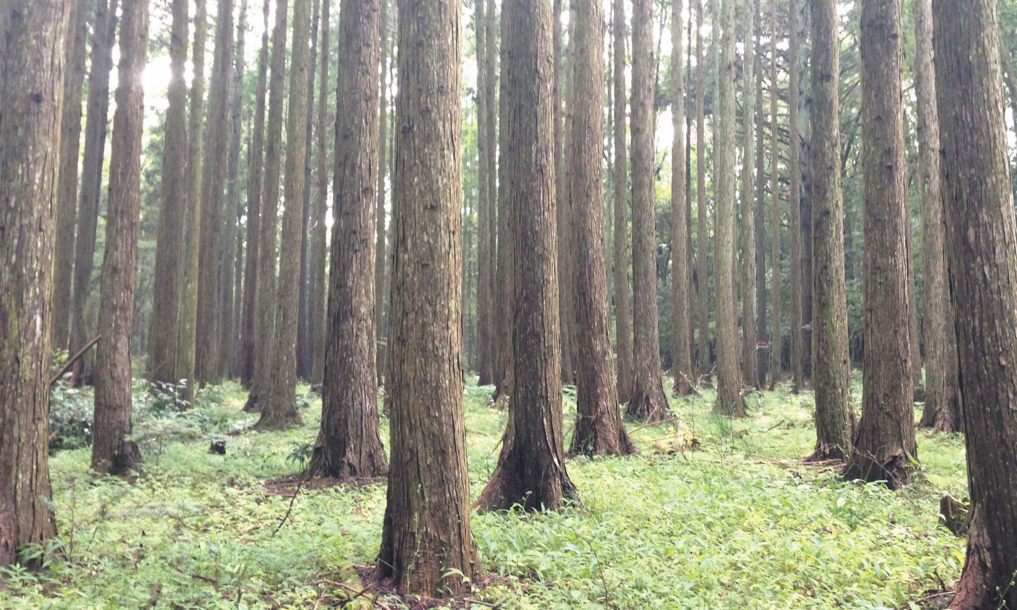千葉県森林組合